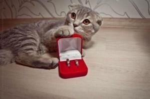 Ще се омъжиш ли за мен?