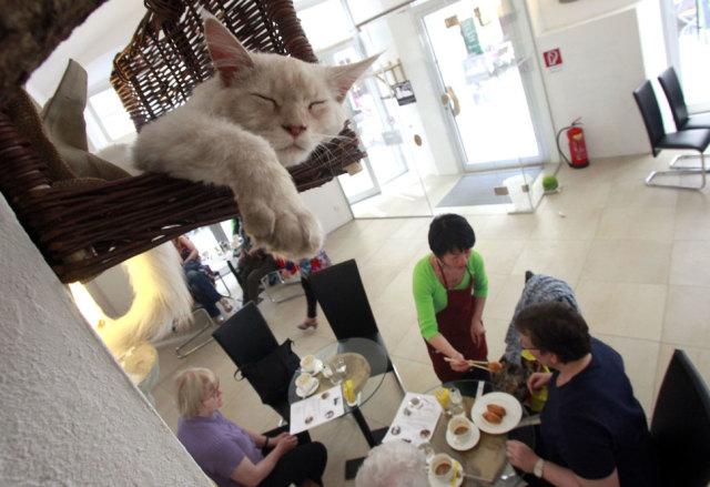 Кафене за котки в Сан Франциско
