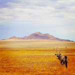 Национален парк Намиб-Науклуфт, Намбия