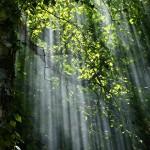 Зелена Варна - засаждане на 158 дръвчета
