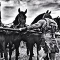 hercules_chariot