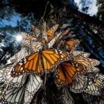 10 впечатляващи снимки на животинската миграция