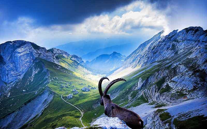 Швейцария е в топ 5 на най-зелените държави в света