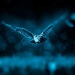 """""""Нощните птици"""" са по-продуктивни"""