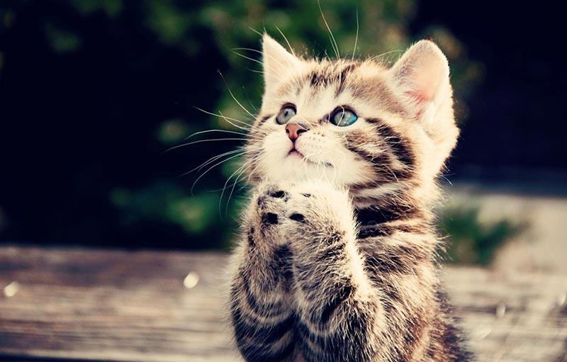 7 факта, които доказват, че котките са страхотни