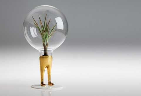 Отглеждайте си растение в офиса