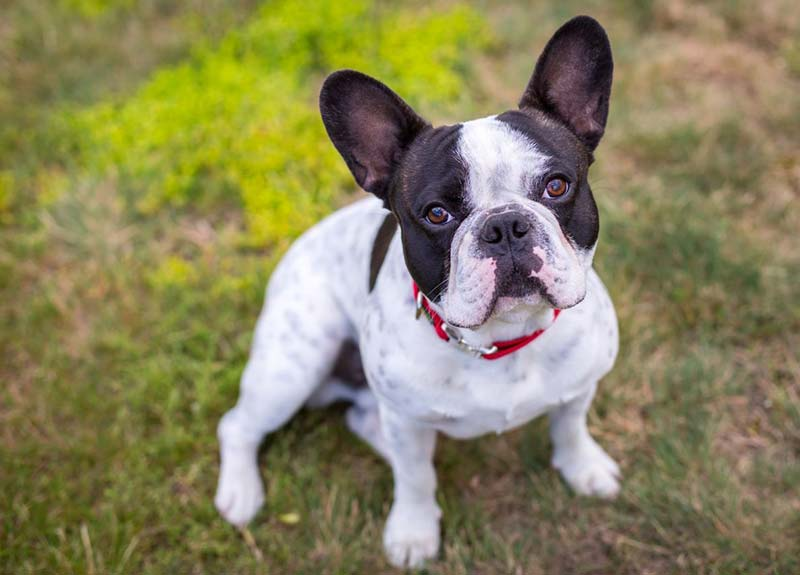 Най-очарователните породи кучета