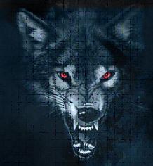 wolf-vokil-varna