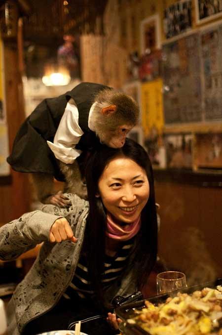 сервитьори маймуни Япония