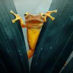 Синдромът на сварената жаба