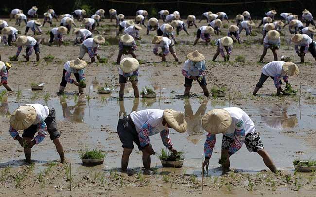 Тайвански фермери